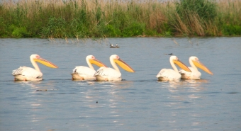 We sell investment company with 736 ha for tourism, aquaculture and agriculture in the Danube Delta, Romania